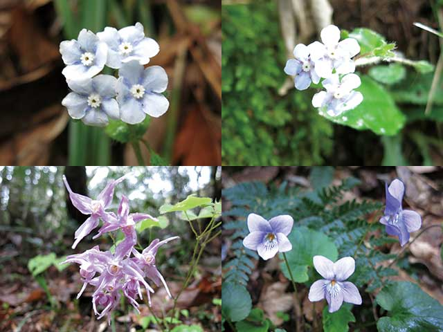 20140419_flowers