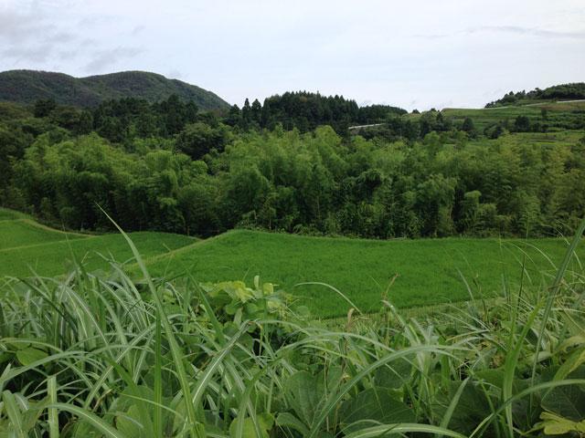 棚田の竹林
